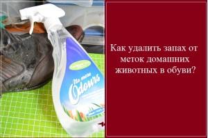 0.195 Актуальная тема. Как удалить запахи от меток домашних животных с обуви?